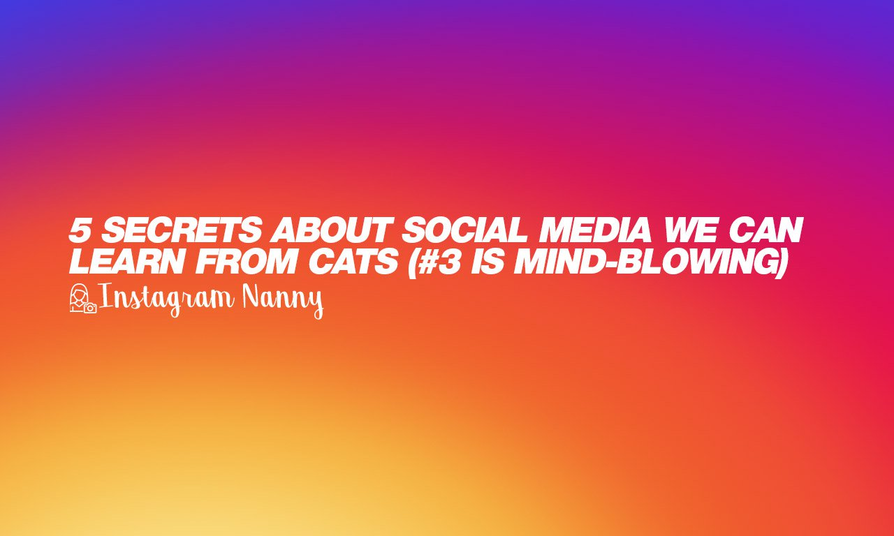 5 Secrets about Social Media We Can Learn From Cats (#3 is unusual)